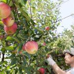 農業を始める方のための確定申告講座!副業は節税効果もあり?